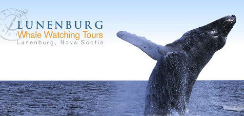 Lunenburg Whale Watching Tour